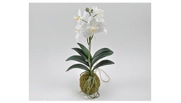 ORCHIDEA BIANCA  X 6 FIORI H 40 CM  SU MUSCHIO